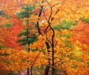 Schölnhammer Herbstwald