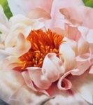 Schölnhammer Blume