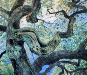 Herbst Olivenbaum
