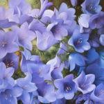 Schölnhammer Blaue Blüten
