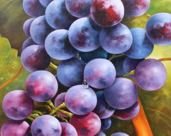 Grapes by Heinz Schölnhammer